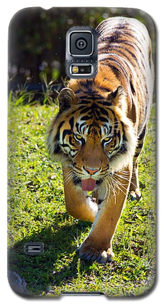 Thirsty Tiger Galaxy S5 Case