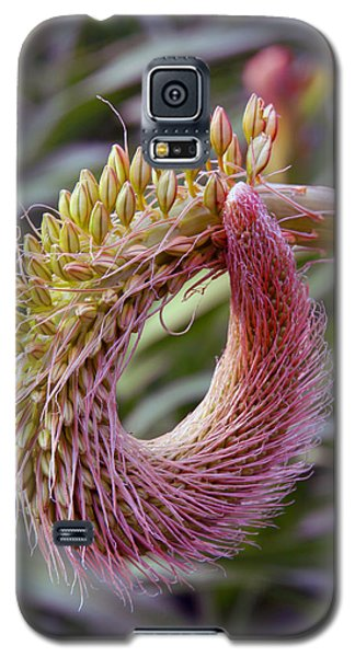 This Bud's For You Galaxy S5 Case