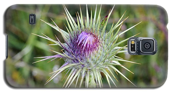 Thistle Flower Galaxy S5 Case by George Atsametakis