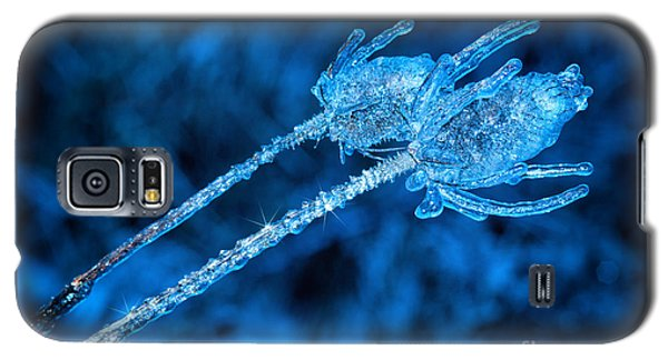Thistle Plant On Icy Night Galaxy S5 Case