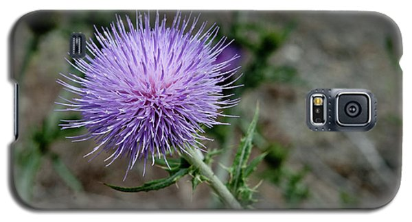 Galaxy S5 Case featuring the photograph Thistle by Rod Wiens