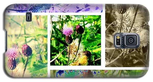 Galaxy S5 Case featuring the photograph Thistle Study by Thomasina Durkay