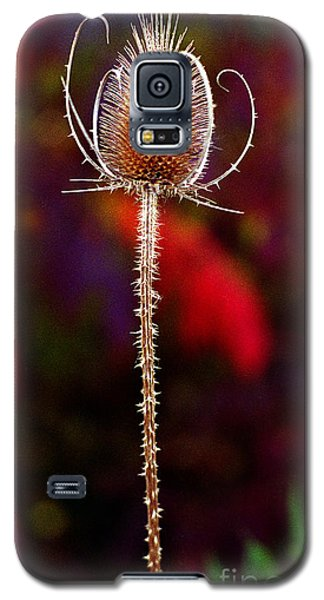 Galaxy S5 Case featuring the photograph Thistle by Tom Brickhouse