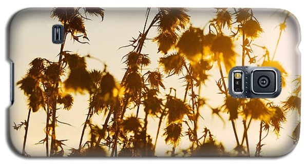 Galaxy S5 Case featuring the photograph Thistles In The Sunset by Chevy Fleet