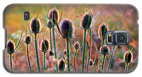 Thistles With Sunset Light Galaxy S5 Case