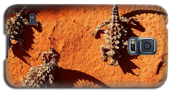 Galaxy S5 Case featuring the photograph Thorny Devils by Evelyn Tambour
