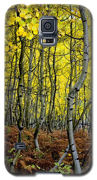 Galaxy S5 Case featuring the photograph Through The Aspen Forest by Ellen Heaverlo