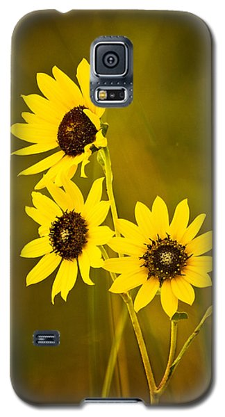 Galaxy S5 Case featuring the photograph A Trio Of Black Eyed Susans by Gary Slawsky