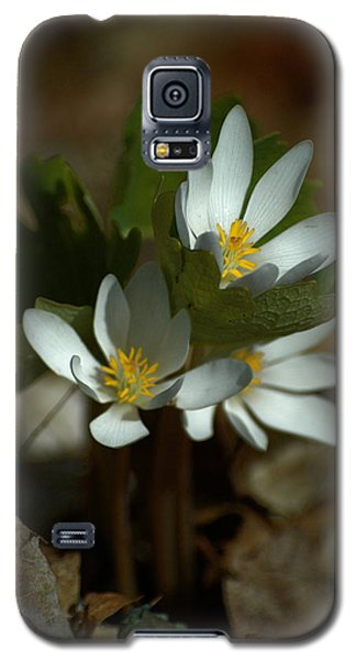 Three Bloods Galaxy S5 Case by Tim Good