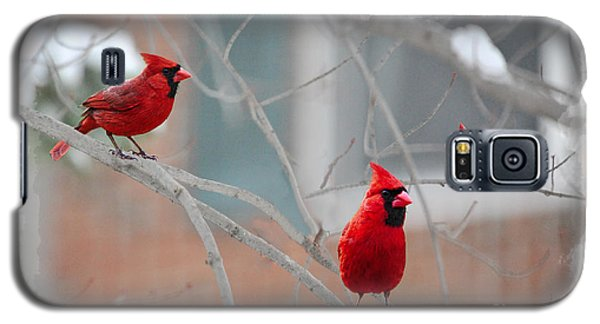 Three Cardinals In A Tree Galaxy S5 Case