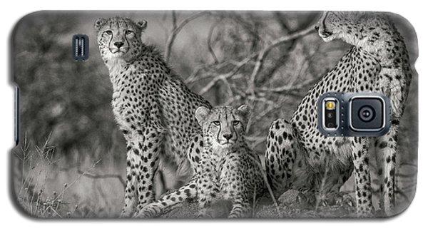 Cheetah Galaxy S5 Case - Three Cats by Jaco Marx