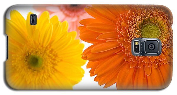 Three Colorful Gerbers  Galaxy S5 Case