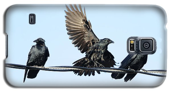 Three Crows On A Wire. Galaxy S5 Case