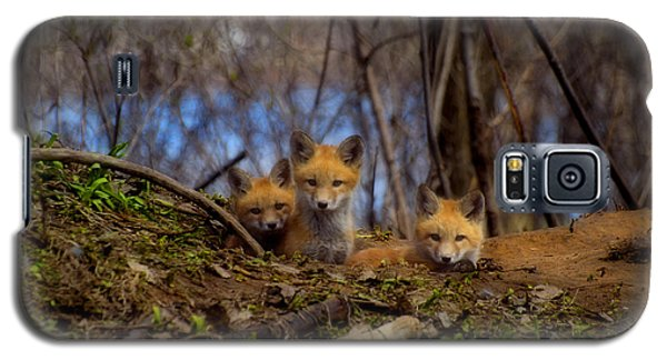 Three Cute Kit Foxes At Attention Galaxy S5 Case