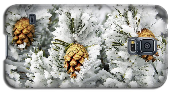 Three Frosty Cones Galaxy S5 Case