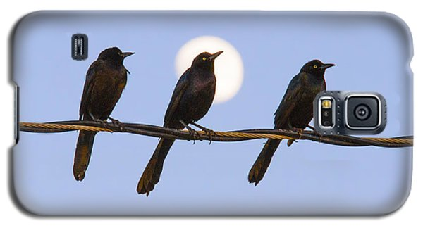 Three Grackles With Full Moon Galaxy S5 Case