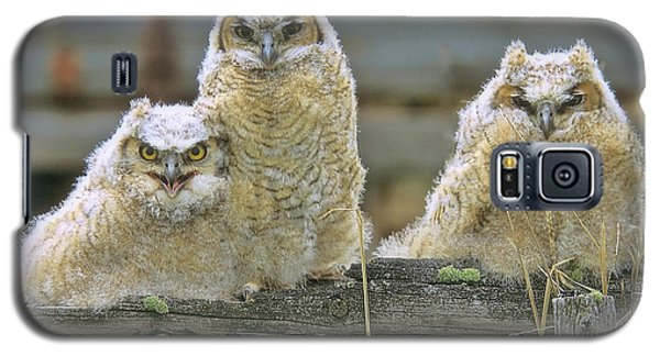 Three Great-horned Owl Chicks Galaxy S5 Case