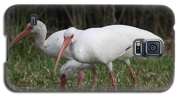 Galaxy S5 Case featuring the photograph Three Ibis Together by Christiane Schulze Art And Photography