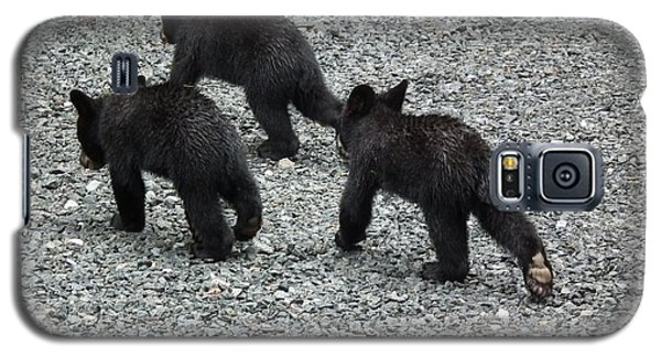 Galaxy S5 Case featuring the photograph Three Little Bears In Step by Jan Dappen