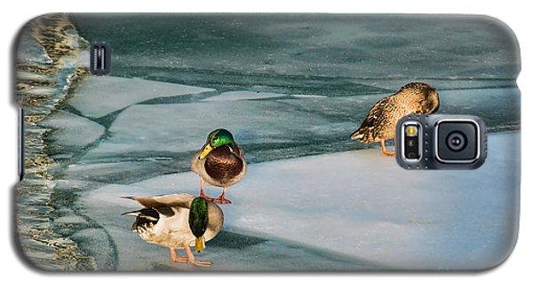 Three Mallards On Partly Frozen Lake Galaxy S5 Case
