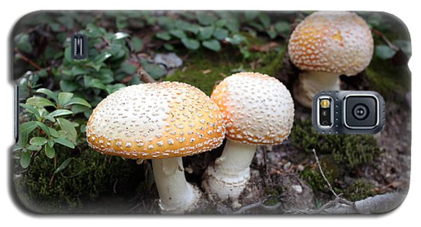 Three Mushrooms Galaxy S5 Case