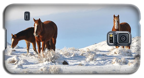 Three Mustangs In Snow Galaxy S5 Case by Vinnie Oakes