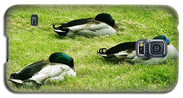 Three Napping Ducks  Galaxy S5 Case by Zinvolle Art