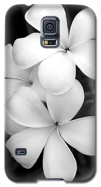 Orchid Galaxy S5 Case - Three Plumeria Flowers In Black And White by Sabrina L Ryan