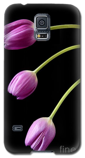 Three Purple Tulips Galaxy S5 Case