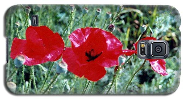 Three Red Poppies Galaxy S5 Case