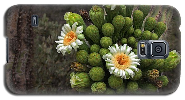 Three Saguaro Blossoms And Many Buds Galaxy S5 Case by Tom Janca