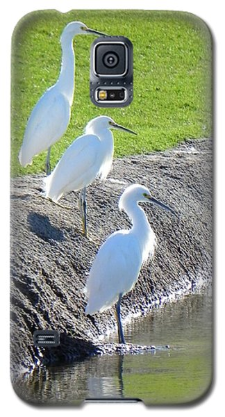 Galaxy S5 Case featuring the photograph Three Stooges by Deb Halloran