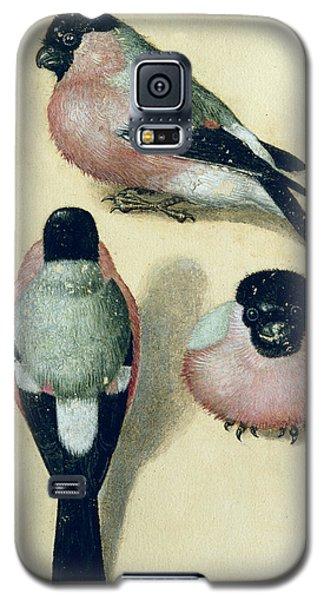 Three Studies Of A Bullfinch Galaxy S5 Case