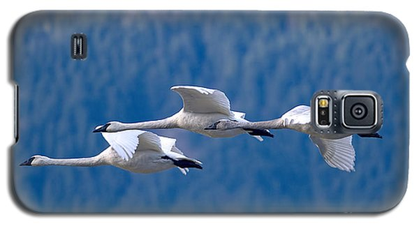 Three Swans Flying Galaxy S5 Case