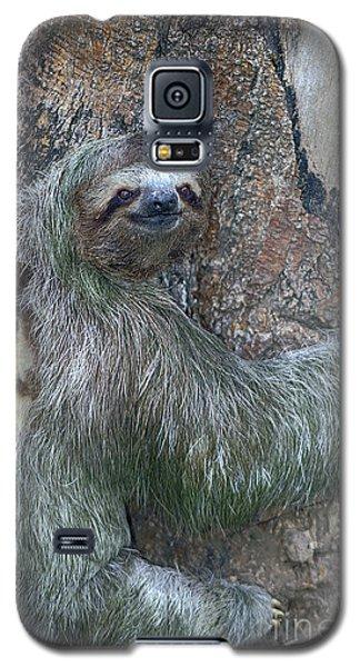 Three Toed Sloth Galaxy S5 Case by Anne Rodkin
