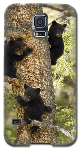 Family Tree Galaxy S5 Case by Aaron Whittemore
