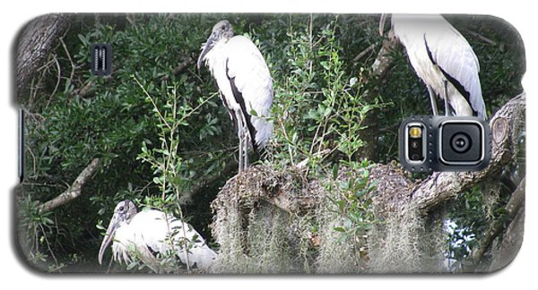 Three Wood Storks Galaxy S5 Case