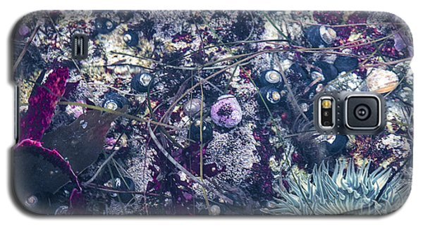 Galaxy S5 Case featuring the mixed media Tidal Pool Assortment by Terry Rowe