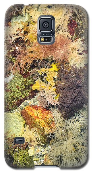 Tidal Pool Color Galaxy S5 Case by Debbie Green