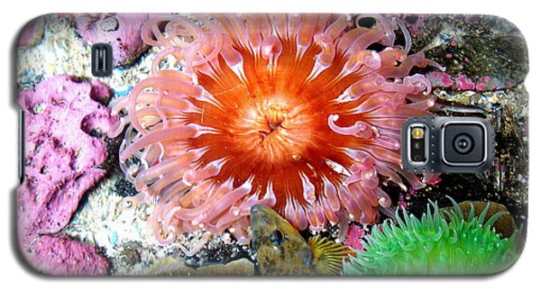 Tide Pool Creatures Galaxy S5 Case