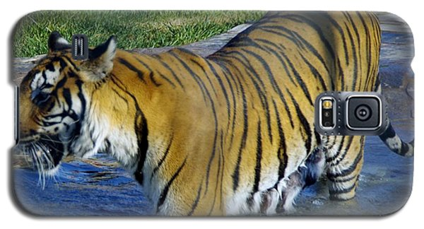 Tiger 4 Galaxy S5 Case