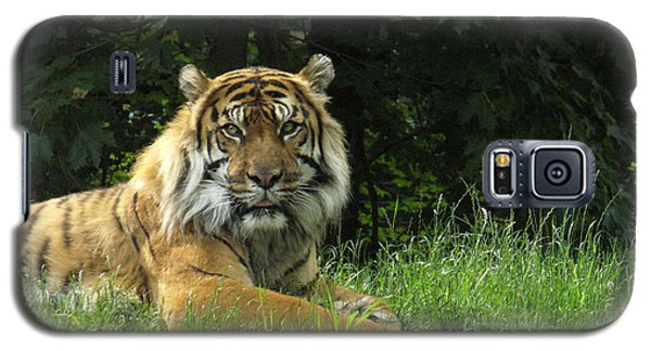 Galaxy S5 Case featuring the photograph Tiger At Rest by Lingfai Leung