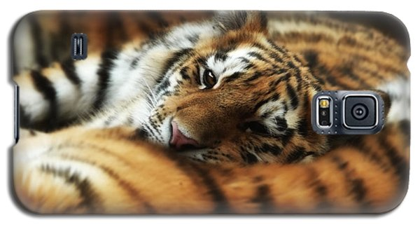 Tiger Cub Resting On Mom's Back Galaxy S5 Case