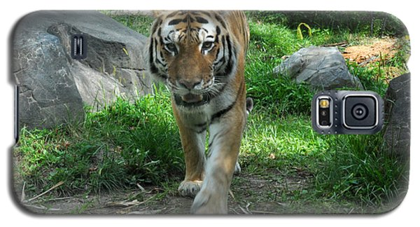 Galaxy S5 Case featuring the photograph Tiger by Diane Lent