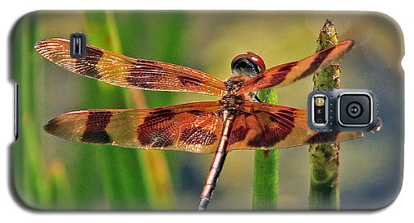 Tiger Dragonfly Galaxy S5 Case