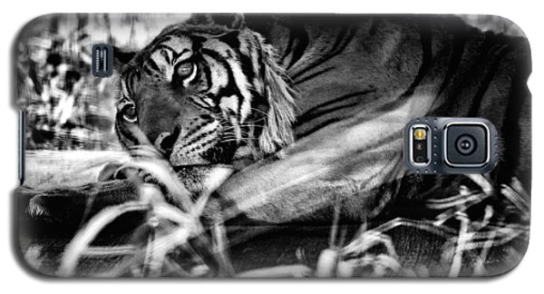 Galaxy S5 Case featuring the photograph Tiger by Hayato Matsumoto