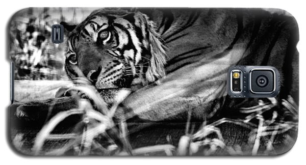 Tiger Galaxy S5 Case