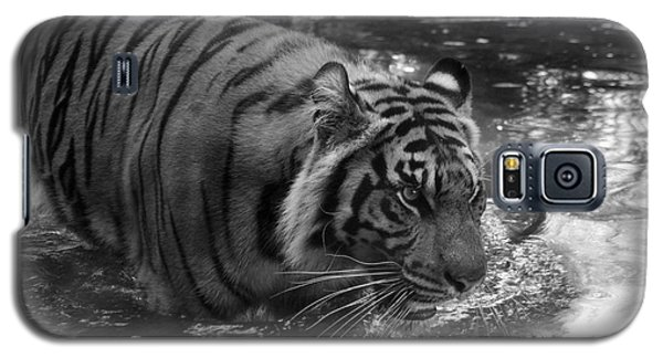 Galaxy S5 Case featuring the photograph Tiger In The Water by Lisa L Silva