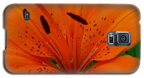 Galaxy S5 Case featuring the photograph Tiger Lily by Bianca Nadeau