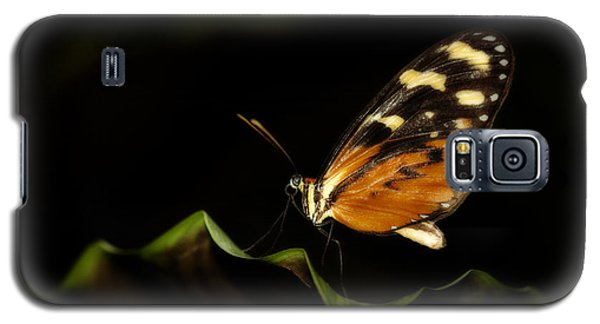 Galaxy S5 Case featuring the photograph Tiger Monarch Butterfly by Zoe Ferrie